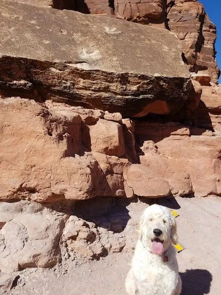 Legends of Moab Dinosaur Tracks
