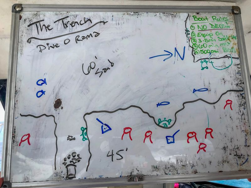 drawing of the trench on a white board. There are small fish drawn on the board, with turtles, manta rays, crab, and a 45 foot depth indicated