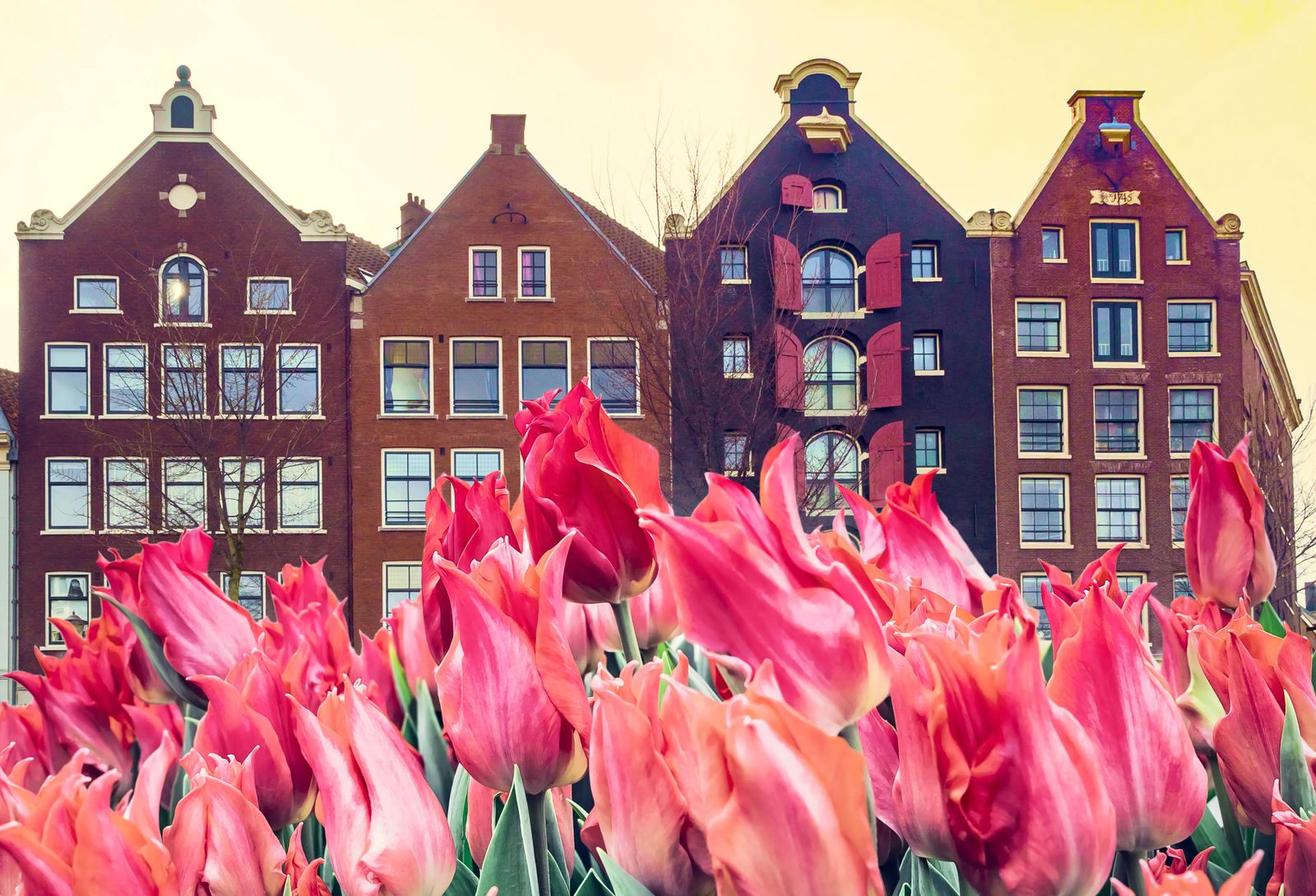 Amsterdam tulips, a month to month travel guide