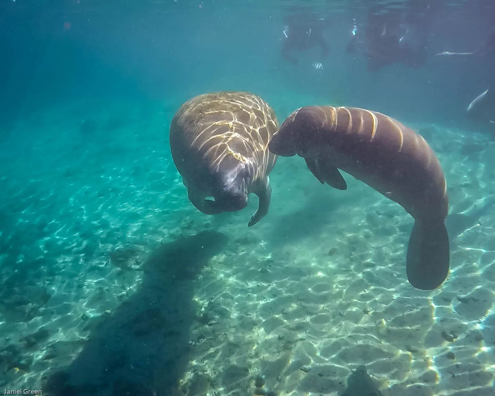 Swim with manatees, a month to month travel guide