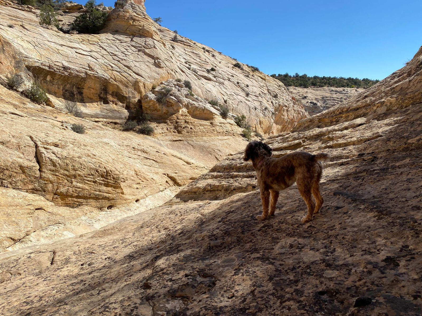 hidden gems of southern utah with small dog exploring bears ears