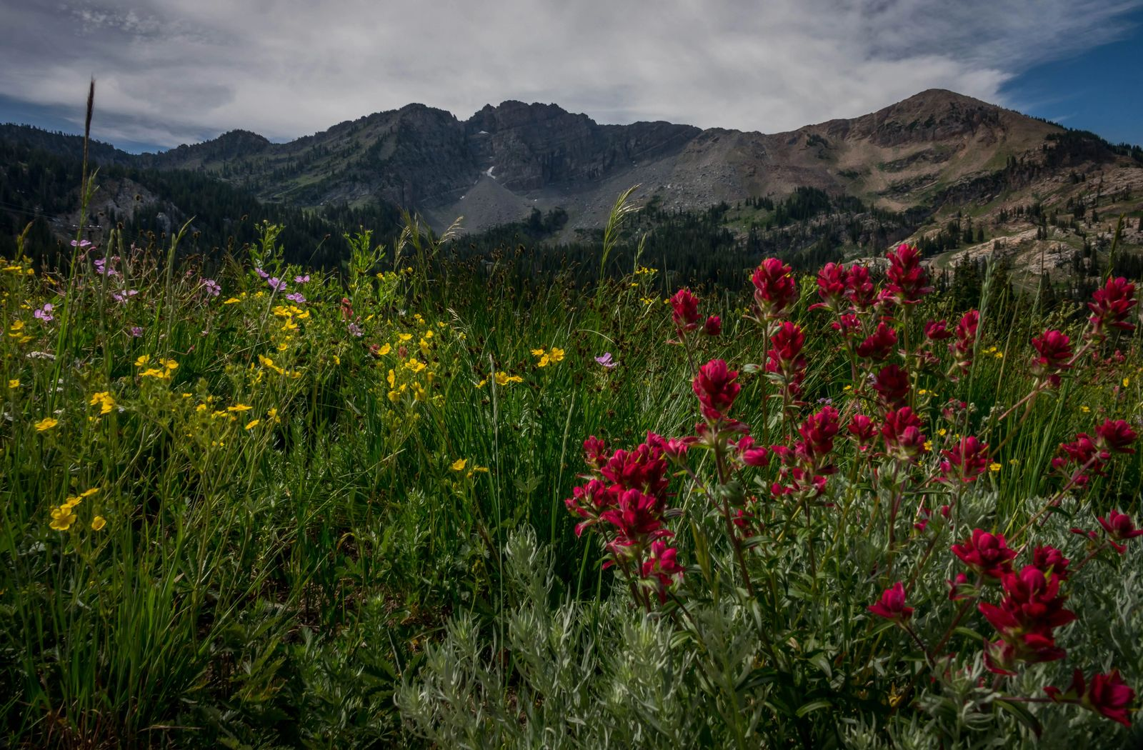 rules of camping in utah mountain meadow with red yellow and purple wild flowers