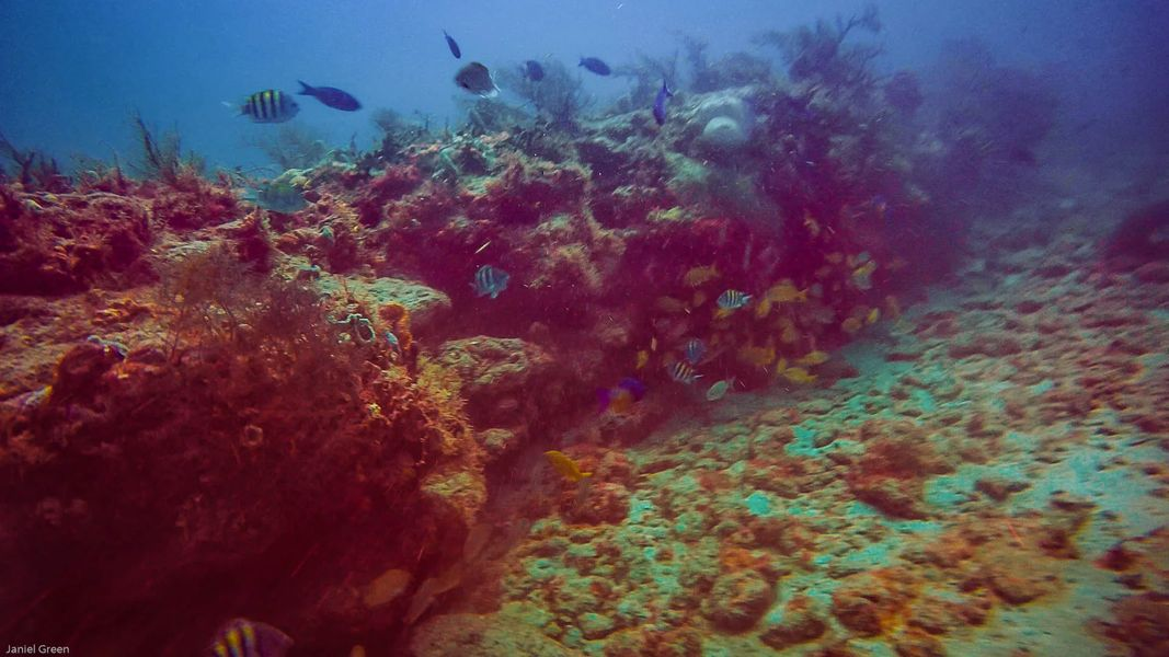 The Trench with barrel coral, multiple fish, some yellow, some striped, hiding among the coral from the scuba diver.