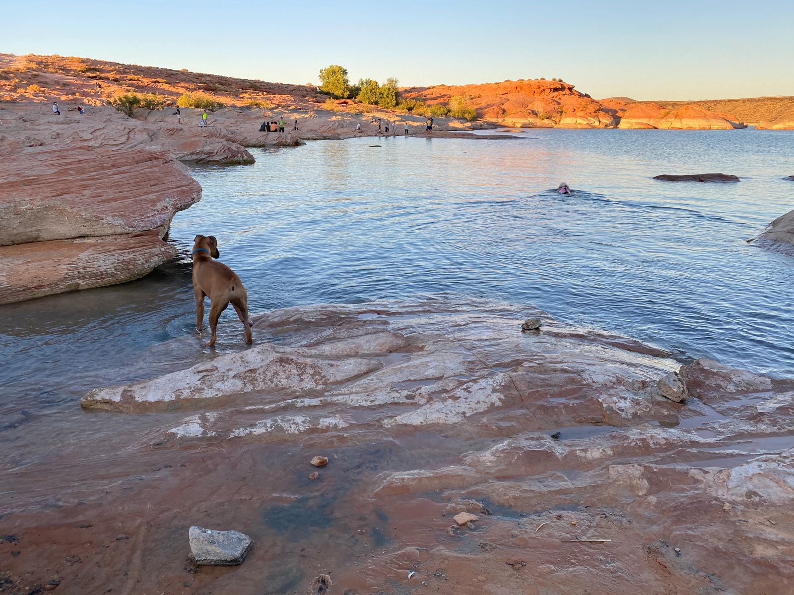 sand hollow state park dog stpping in water for the first time