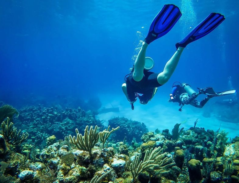 Top Diving Locations Around the World